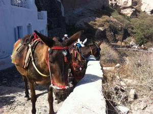 Donkeys up the 292 steps in Oia