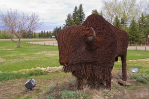 """Don't fence me in"" A bison made from barbed wire fence. Battlefords, Sask"